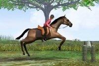 Salto a ostacoli per cavalli
